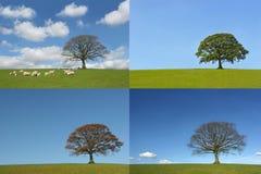 Les quatre saisons Image libre de droits