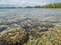 Les récifs coraliens détériorent Fragments de corail Les récifs coraliens sont extrémité Photographie stock libre de droits
