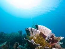 Les récifs spectaculaires de Raja Ampat abondent avec l'espèce marine, Indonésie Images libres de droits