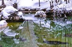Les réflexions d'hiver dans une montagne froide coulent, les Alpes slovènes Image libre de droits