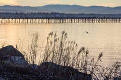 Les réflexions d'or sur la mer forment le fond agréable pour des silhouettes d'usine photographie stock