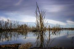 Les réflexions de l'arbre mort en arbres tranquilles de PondDead, couleur de ciel, et nuages se sont tout reflétées dans l'étang  images stock