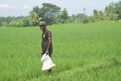 Les résidents ont subventionné l'utilisation d'engrais de BULOG Photo libre de droits