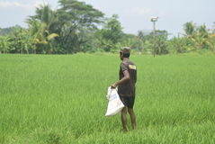 Les résidents ont subventionné l'utilisation d'engrais de BULOG Images libres de droits