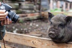 Les résidents urbains sont venus à la ferme Photographie stock