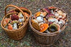 Les résultats du ` apaisent le ` de chasse - deux paniers de champignons et de beaucoup d'amusement Photo libre de droits