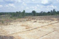 Les résultats du bois de construction clair de coupe dans Ridge Mountains bleu de la Virginie Image libre de droits