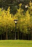 Les réverbères et les arbres en parc Images libres de droits