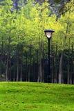 Les réverbères et les arbres en parc Photographie stock libre de droits