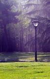 Les réverbères et les arbres en parc Image libre de droits