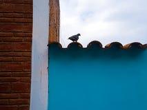 Les rêves d'un pigeon seul image stock