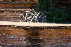 Les racines, Ayuthaya, Thaïlande Image stock