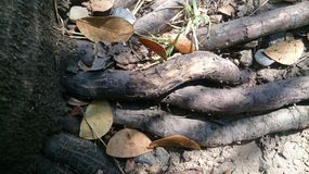 Les racines détaillent le fond naturel de texture Photographie stock