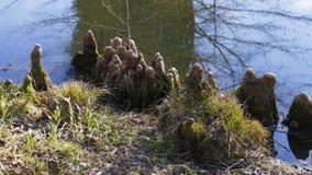 Les racines d'arbre se développent dans un petit lac vers le haut, maison drôle d'elfes photographie stock