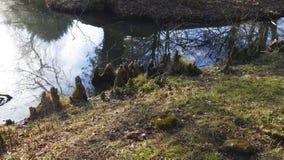 Les racines d'arbre se développent dans un petit lac vers le haut, maison drôle d'elfes photo libre de droits