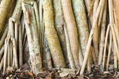 Les racines d'arbre sur la feuille ont couvert la terre Photographie stock libre de droits