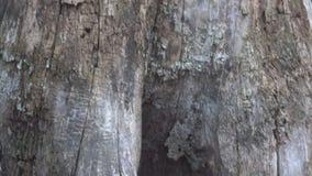 Les racines d'un arbre sec clips vidéos