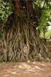 Les racines de Bouddha de tête de l'arbre Image libre de droits