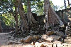 Les racines des arbres de jungle s'entrelacent avec la maçonnerie en pierre des structures antiques chez Angkor Vat, Cambodge photographie stock