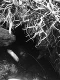 Les racines ont obtenu moi noir et le fonctionnement Photo libre de droits