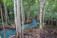 Les racines vert d'émeraude de l'eau et d'arbre de la tourbe inondent la forêt chez Tha Pom Khlong Song Nam Photographie stock