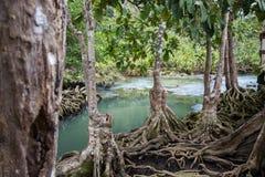 Les racines vert d'émeraude de l'eau et d'arbre de la tourbe inondent la forêt chez Tha Pom Khlong Song Nam Photos stock