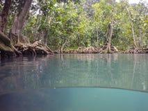 Les racines vert d'émeraude de l'eau et d'arbre de la tourbe inondent la forêt chez Tha Pom Khlong Song Nam Photo stock