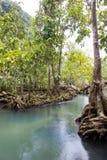 Les racines vert d'émeraude de l'eau et d'arbre de la tourbe inondent la forêt chez Tha Pom Khlong Song Nam Images stock