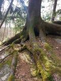 Les racines vont profondément photos stock