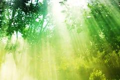 Les raies du soleil imprègnent par les branches des arbres W Images libres de droits