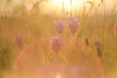 Les raies lumineux du coucher de soleil sur le fond du pré brouillé fleurit avec les objets façonnés lumineux Le concept de la na Photos stock