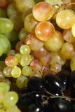les raisins de plan rapproché se sont mélangés Photographie stock