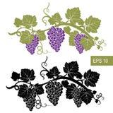 Les raisins sont des symboles descripteur Signes d'isolement par vecteur illustration de vecteur