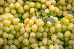 Les raisins sont verts là ne sont aucune graine, admirablement disposée photographie stock libre de droits