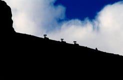 Les RAM de Bighorn en silhouette du lac caché traînent, parc national de glacier, Montana Photos stock