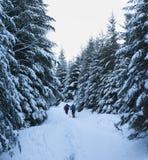 Les randonneurs vont sur le chemin neigeux de pied dans la forêt impeccable couverte de neige à Photographie stock libre de droits