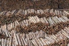 Les rangées des arbres Photographie stock libre de droits
