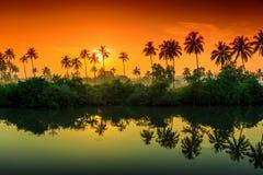 Les rangées des palmiers se sont reflétées dans un lac à l'aube Photo libre de droits