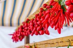 Les rangées des poivrons de piments s'accordent Photographie stock libre de droits