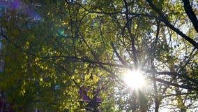 Les rayons chauds du ` s du soleil font leur voie par le feuillage un jour d'automne banque de vidéos