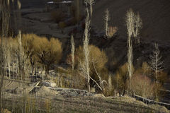 Les rayons de la lumière dans les milieux de forêt créent une sensation mystique photos libres de droits