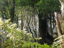 Les rayons de la lumière du soleil rayonnent par la jungle dense de forêt photo stock