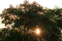 Les rayons de la lumière traversent les feuilles d'un arbre Image libre de droits