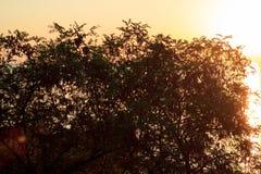 Les rayons de la lumière traversent les feuilles d'un arbre Image stock