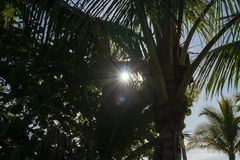 Les rayons de soleil et les taches colorées du soleil jettent un coup d'oeil par des palmiers dans le motiv images stock