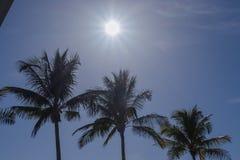 Les rayons de soleil se prolongent au-dessus des palmiers l'après-midi tropical de la Floride image libre de droits