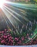 Les rayons de soleil se prolongent au-dessus du jardin d'agrément Chicago pendant l'arrosage de printemps photos stock