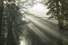 Les rayons de Sun Photo libre de droits