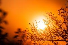 LES RAYONS DE THE SUN PAR les BRANCHES Images libres de droits