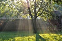 Les rayons du soleil coulent dans une arrière-cour Images libres de droits